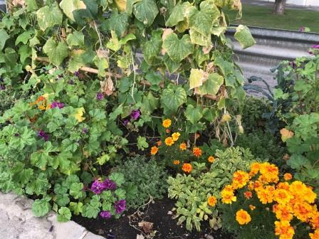 Saisonbepflanzung mit Kräutern und Gemüse